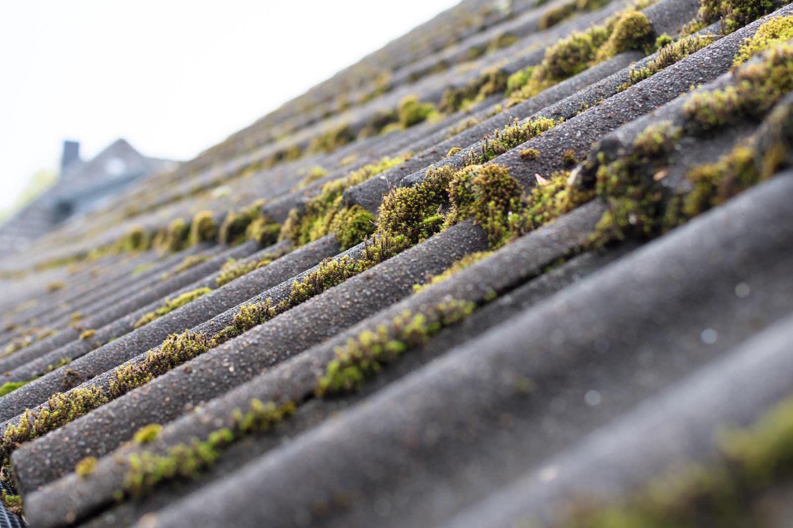 anti mousse toiture rénovation logement
